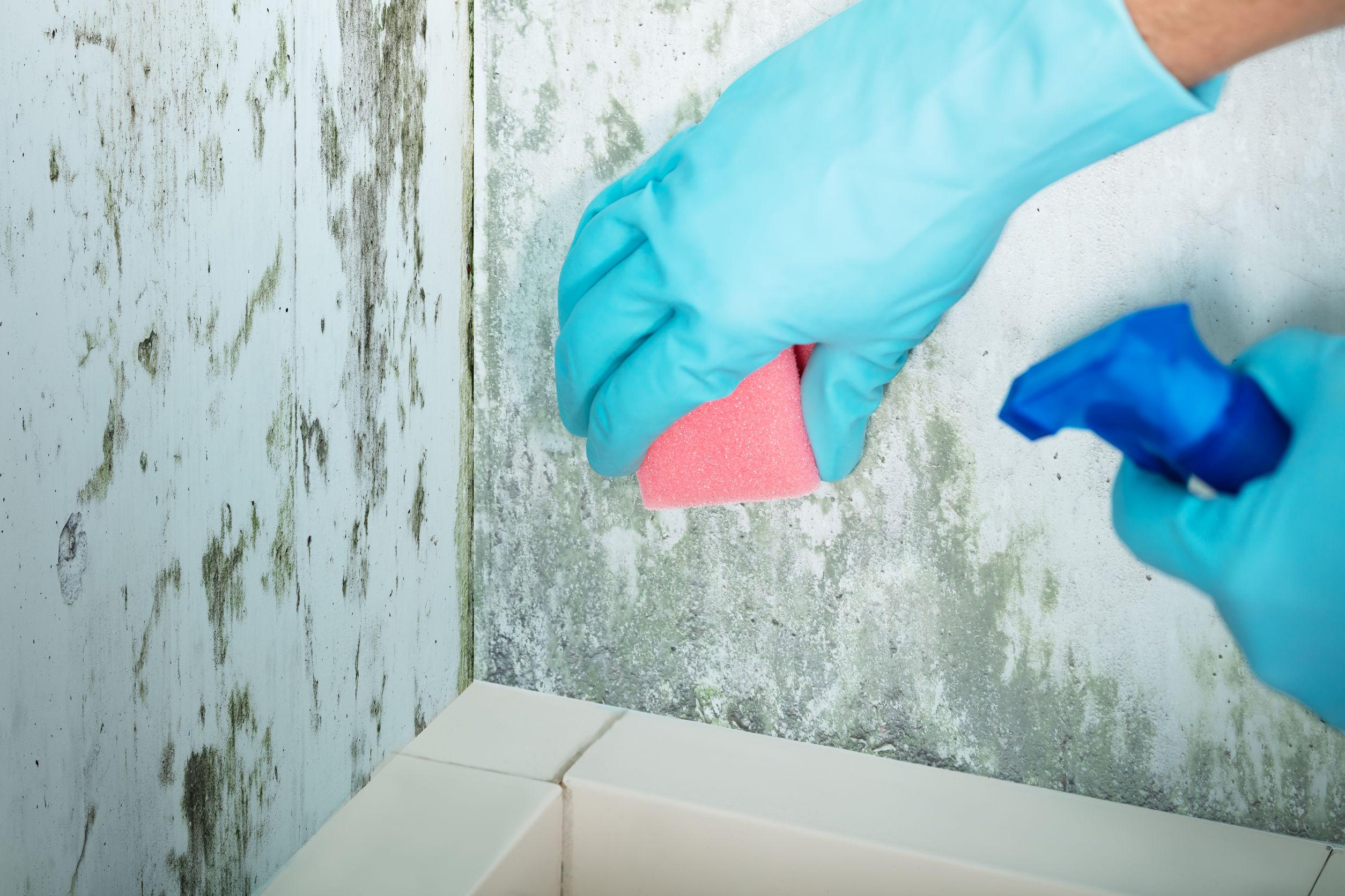 odstraňování plísní